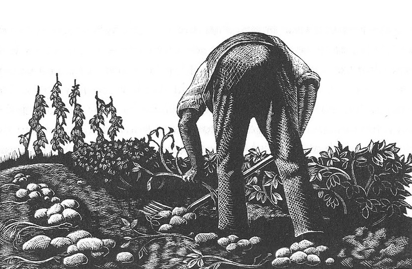 Wood engraving of man digging potatoes