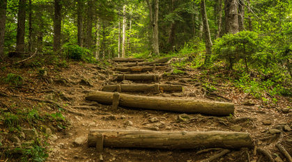 logs creating steps on a forest trail