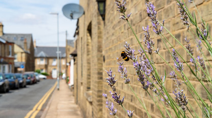 A wall and bees