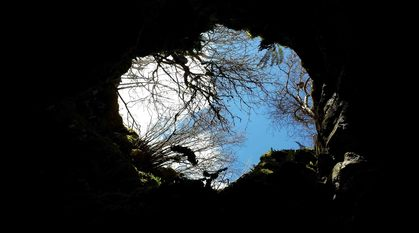 looking out from a cave up to the blue sky above. trees and ferns overhang the edge of the cave